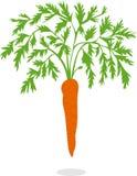 Zanahoria, ejemplos Imágenes de archivo libres de regalías