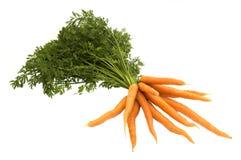 Zanahoria en el fondo blanco Imágenes de archivo libres de regalías