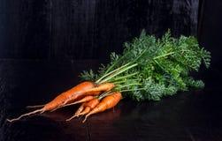 Zanahoria en el vector Fotografía de archivo
