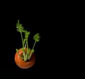 Zanahoria en fondo negro Foto de archivo libre de regalías
