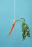Zanahoria en un palillo en azul fotografía de archivo