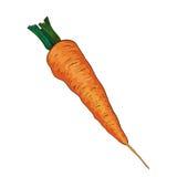 Zanahoria en vector libre illustration