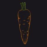 Zanahoria a mano Ilustración del vector Fotos de archivo