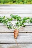 Zanahoria orgánica fresca en la tabla de madera Fotos de archivo
