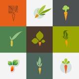 Zanahoria. Sistema de elementos decorativos del diseño del vector libre illustration