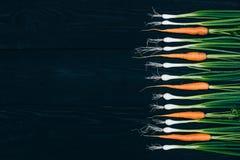Zanahoria y cebolla jovenes El cocinar con las verduras frescas Foto de archivo