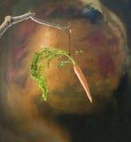 Zanahoria y palillo fotos de archivo libres de regalías