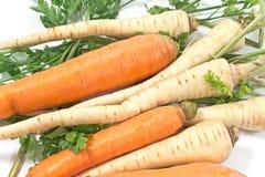 Zanahoria y perejil frescos con la raíz Fotografía de archivo