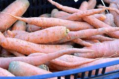 Zanahorias Fotografía de archivo