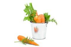 Zanahorias aisladas Foto de archivo libre de regalías