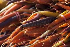 Zanahorias coloridas Foto de archivo