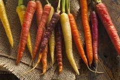 Zanahorias crudas coloreadas multi coloridas Fotos de archivo libres de regalías