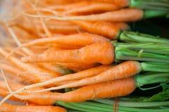 Zanahorias de bebé frescas Fotos de archivo libres de regalías