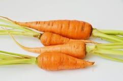 Zanahorias de bebé frescas Imagen de archivo