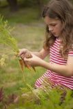 Zanahorias de la cosecha de la muchacha fuera del jardín vegetal Fotos de archivo