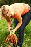 Zanahorias de la cosecha de la mujer Imagen de archivo libre de regalías