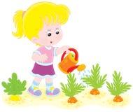 Zanahorias de riego de la muchacha Fotografía de archivo