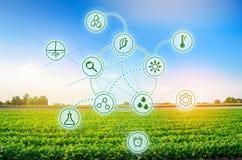 Zanahorias en el campo Trabajo y desarrollo de nuevos métodos y selección científicos de variedades Altas tecnologías e innovacio fotos de archivo