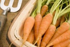 Zanahorias en un Trug de madera Imagen de archivo