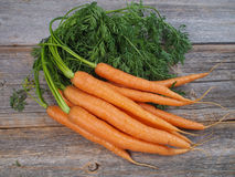 Zanahorias escogidas frescas Imagen de archivo libre de regalías