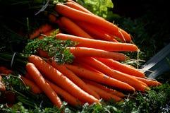 Zanahorias frescas Imagen de archivo