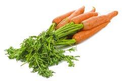 Zanahorias frescas Fotografía de archivo