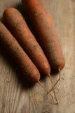 Zanahorias frescas altas en suelo arenoso Imagen de archivo