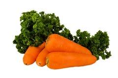 Zanahorias frescas con parcley aisladas en el fondo blanco Imágenes de archivo libres de regalías