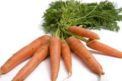 Zanahorias frescas del jardín Fotografía de archivo