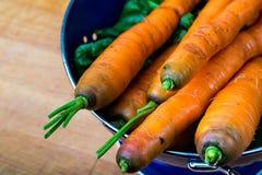 Zanahorias frescas y verdes Imágenes de archivo libres de regalías