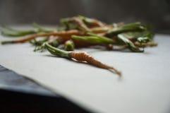 Zanahorias jovenes Imagen de archivo libre de regalías