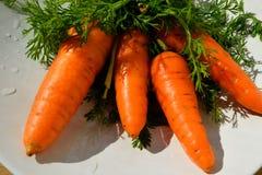 Zanahorias jugosas con el tallo verde en la placa blanca fotografía de archivo libre de regalías