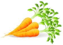 Zanahorias nutritivas Foto de archivo