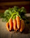 Zanahorias orgánicas. Imagen de archivo libre de regalías
