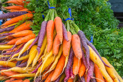 Zanahorias orgánicas del arco iris de los manojos Foto de archivo
