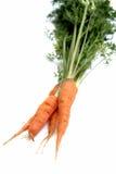 Zanahorias orgánicas frescas Fotografía de archivo libre de regalías