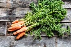 Zanahorias orgánicas frescas con los tops y las raíces para cultivar un huerto auténtico Foto de archivo libre de regalías