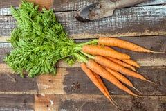 Zanahorias orgánicas frescas en el fondo de madera Imagenes de archivo