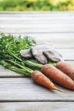 Zanahorias orgánicas frescas en la tabla de madera Foto de archivo
