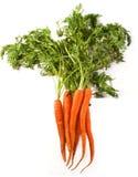 Zanahorias orgánicas maduras Foto de archivo libre de regalías