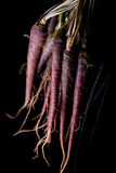 Zanahorias púrpuras Fotos de archivo