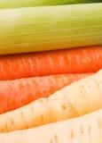 Zanahorias, puerros y pastinacas Fotografía de archivo libre de regalías