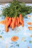 Zanahorias recién cosechadas imagenes de archivo