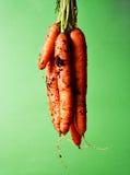 Zanahorias sucias Imagenes de archivo