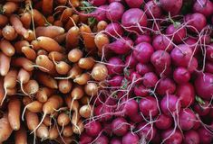 Zanahorias y r?banos fotografía de archivo libre de regalías
