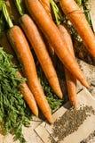 Zanahorias y semillas Fotos de archivo libres de regalías