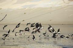 Zancos que vuelan en el río del LA Fotos de archivo libres de regalías