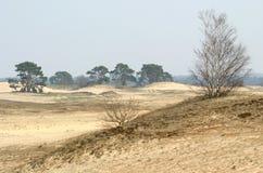 Zand-afwijking, bomen en gras Stock Fotografie