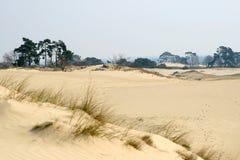 Zand-afwijking, bomen en gras Royalty-vrije Stock Foto