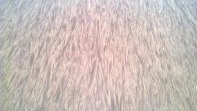 Zand bij Kribi-strand Royalty-vrije Stock Foto's